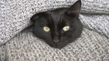 black fluffy cat sleeping on a shelf with wool knitted things