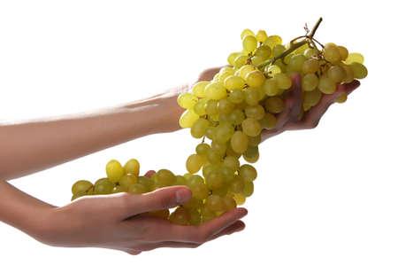 Hands;  grapes; Vitis;