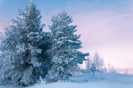 Photo pour Trees covered with rime, a bright sunny day - image libre de droit
