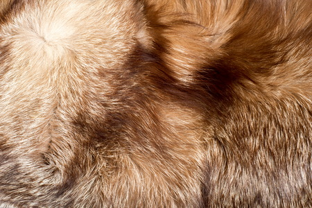 fur. The coat of the animal. The fur of the animal. texture Background. fox Fur