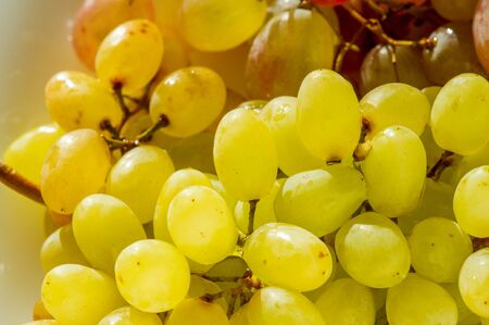 Foto für Grapes can be eaten fresh as table grapes or they can be used for making wine, jam, juice, jelly, grape seed extract, raisins, vinegar, and grape seed oil. Grapes are a non-climacteric type of fruit - Lizenzfreies Bild