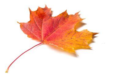 Photo pour Autumn colorful maple leaf - image libre de droit