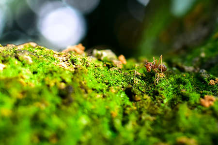 Photo pour Red ant is very small. Selective focus, free space for text. - image libre de droit