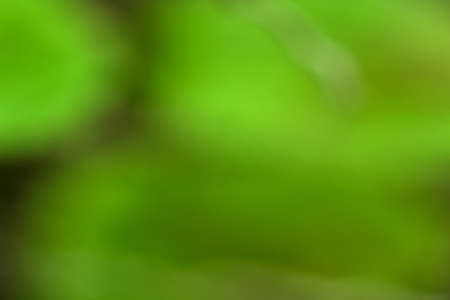 Photo for Bokeh green nature, Subtle background in abstract style for graphic design or wallpapers - Royalty Free Image