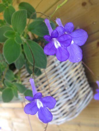 Cute flower basket on wood