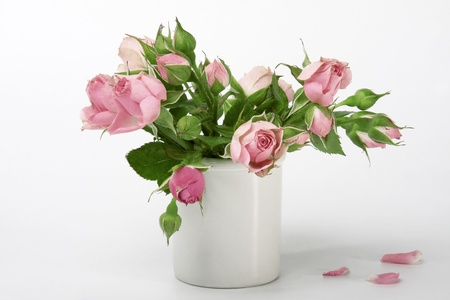 roses in a small vase isolated on white background