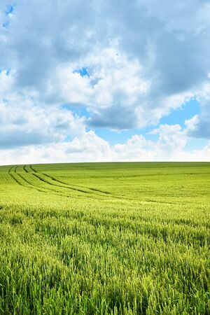 Photo pour Bright sunny summer day large clouds over green field of young wheat - image libre de droit