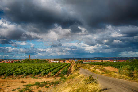 Photo for vineyard landscape in summer in Spain - Royalty Free Image