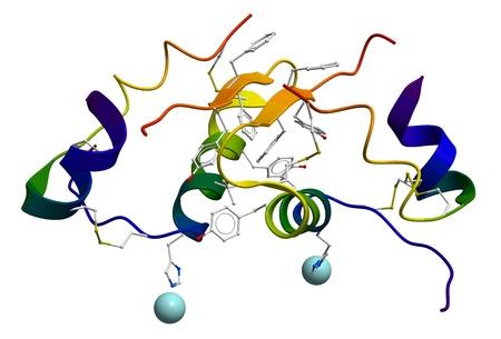 Human insulin molecular structure