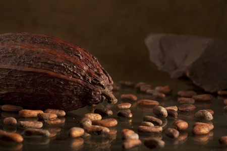 cocoa bean with chocolate on background