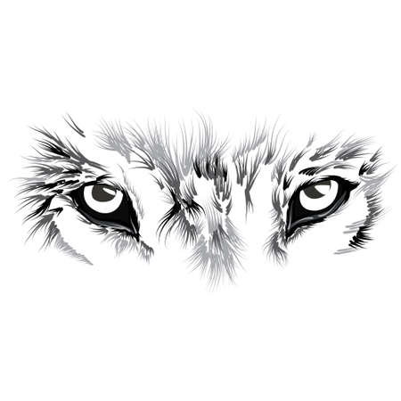 Photo pour beautiful Wolf face. illustration - image libre de droit