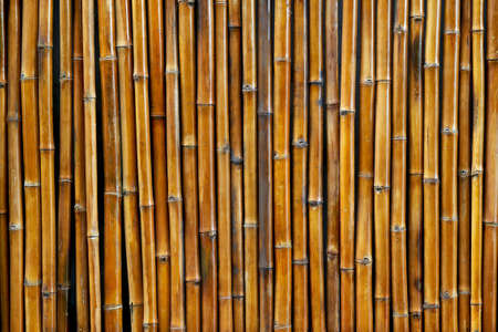 Photo pour Background texture of bamboo wall. Natural pattern. - image libre de droit