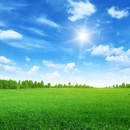 Photo for Field of grass,blue sky and sun. - Royalty Free Image