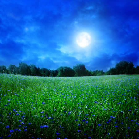 Cornflower field under moon light.