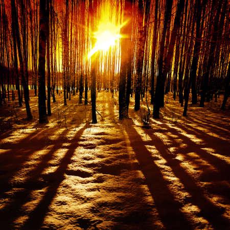 Foto de Last rays of the sun in winter forest. - Imagen libre de derechos