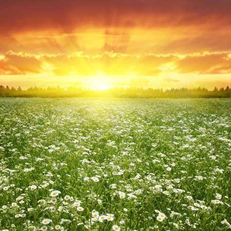 Flower field at sunset