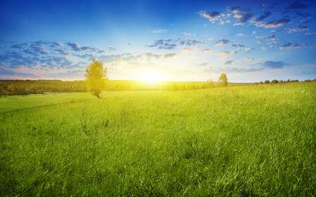 Photo pour Field of grass at twilight  - image libre de droit