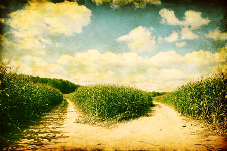 Two paths in the corn field in grunge and retro style