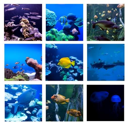 Photo pour Collage of underwater photos. Collection of tropical fishes - image libre de droit