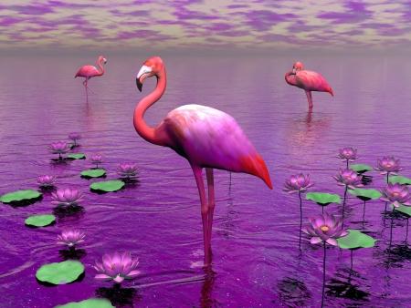 Photo pour Beautiful pink flamingos among water lilies and violet sky - image libre de droit