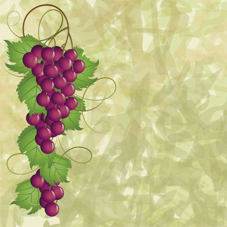 Grapevine on a green background