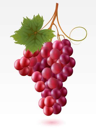 Foto de Red grapes with green leaf on a white background - Imagen libre de derechos