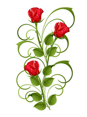 Three red roses on a white background