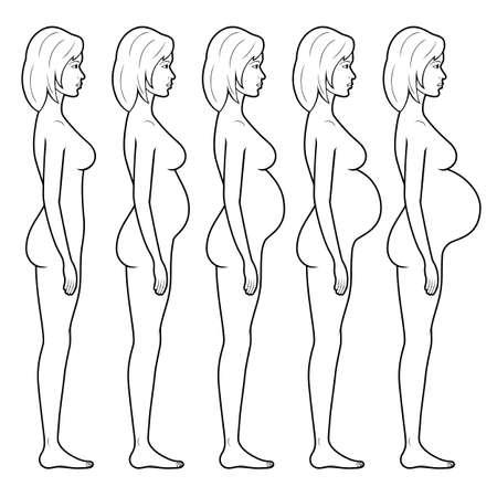 Illustration pour Vector illustration of stages of pregnancy of the woman. - image libre de droit
