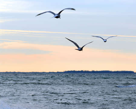 Seagulls flying over ocean at quiet sunset