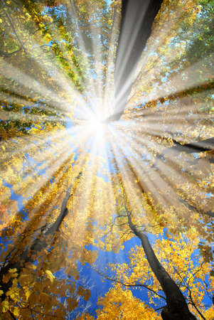 Sun rays in a golden autumn forest