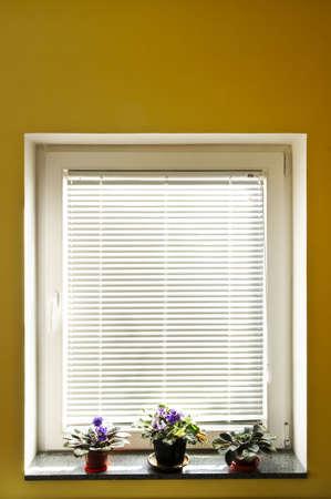 Horizontal blinds on window with three houseplants