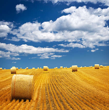 Photo pour Agricultural landscape of hay bales in a golden field - image libre de droit