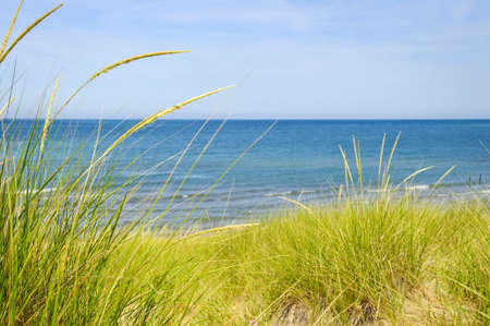 Grass on sand dunes at beach. Pinery provincial park, Ontario Canada