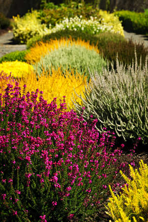 Photo for Beautiful colorful flower garden with various flowers - Royalty Free Image