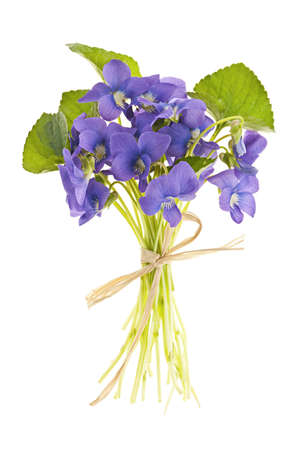 Bouquet of purple wild violets tied with bow isolated on white