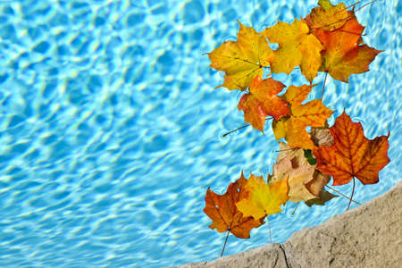Photo pour Fall leaves floating in swimming pool water - image libre de droit