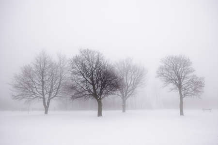 Photo for Foggy winter scene with leafless trees - Royalty Free Image