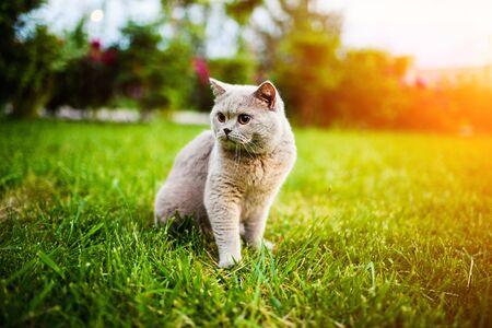 Photo pour Sweet cat on green grass - image libre de droit