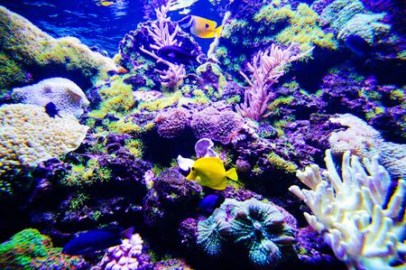 Photo pour Wonderful and beautiful underwater world with corals and tropical fish. - image libre de droit