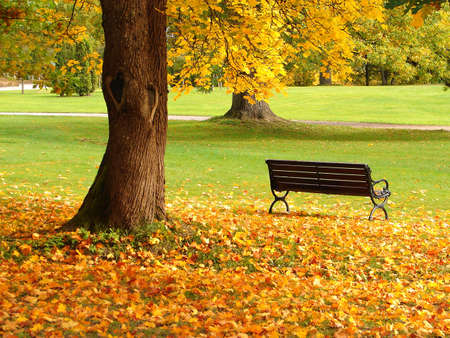Bench and oak in city park in the autumn