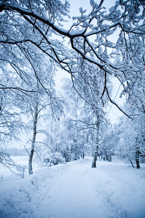 Photo pour Winter trees on very cold winter day in Finland - image libre de droit