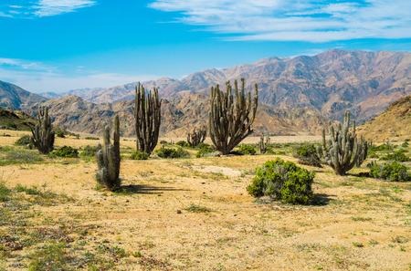 Deserted landscape with cactus in Parque Nacional Pan de Azucar, Chile