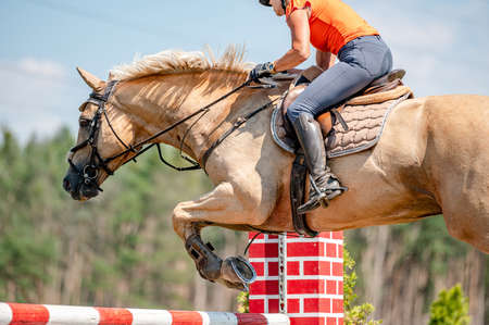 Photo for Horse detail from showjumping competition in summer. Close-up detail of horse movement. - Royalty Free Image
