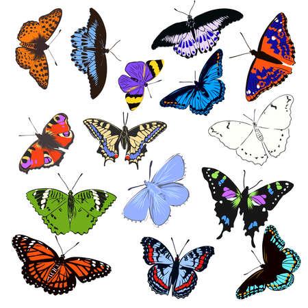 Illustration pour colorful realistic butterfly, insect, vector illustration for decoration - image libre de droit