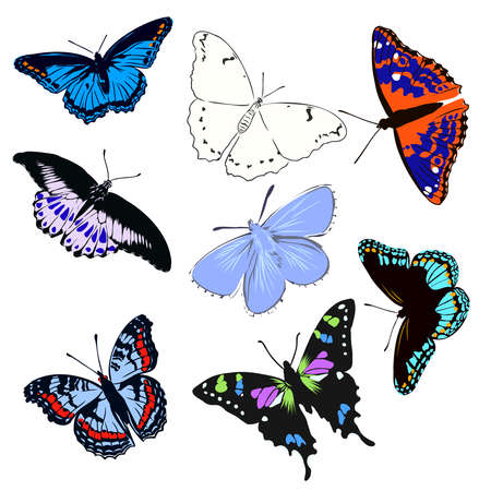 Illustration for colorful realistic butterfly, insect, vector illustration for decoration - Royalty Free Image