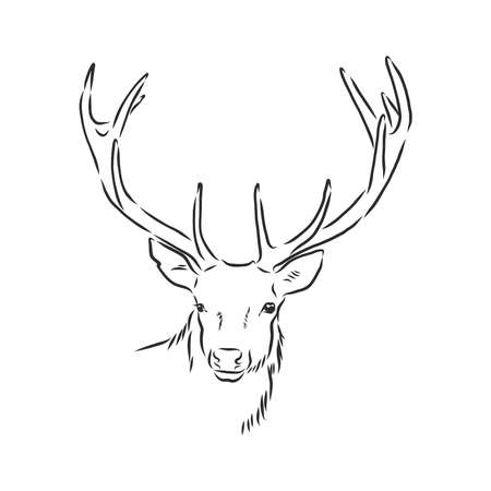 Illustration for Deer portrait. Hand drawn vector illustration. Can be used separately from your design. - Royalty Free Image
