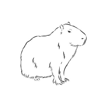 Illustration pour Capybara hand drawing. Animals of South America series. Vintage engraving style. Vector illustration art. Black and white. Object of nature naturalistic sketch. - image libre de droit