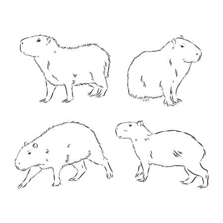 Illustration pour Capybara and birds on white background abstract illustration - image libre de droit