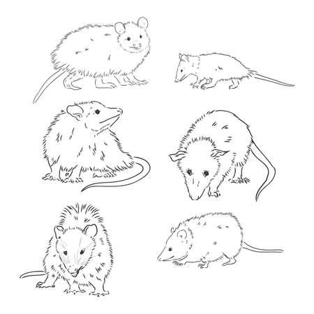 Illustration pour Vector sketch possum muzzle possum vector illustration - image libre de droit