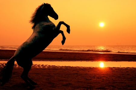A rearing horse on the beach at sunset - photomanipulation